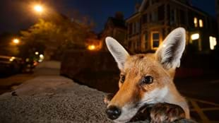 Hull 2017 - Wildlife Photographer of the Year