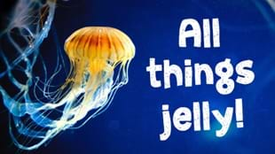 All things jelly