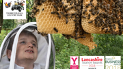 Half Term Fun THE BEE CENTRE at Thornton Hall Country Park