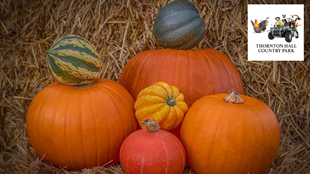 Halloween & Pumpkin Picking Patch at Thornton Hall Country Park
