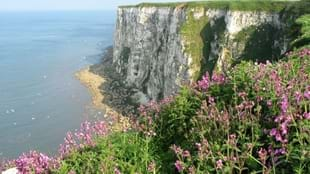 Wicked Wizardry at RSPB Bempton Cliffs!
