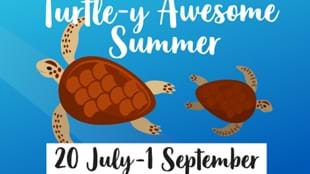 Turtle-y Awesome Summer