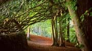 The Secrets of Skipton Castle Woods Guided Walk