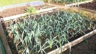 Tomato and Other Tips for Greenhouse/Polytunnel Growing