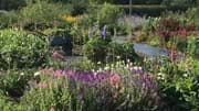 Choosing Plants for a Cut Flower Garden