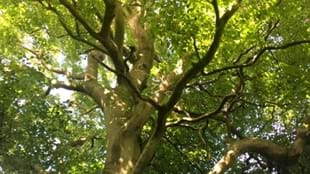 Skipton Castle Woods The Myths of Trees Guided Walk