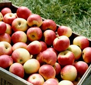 APPLE DAY & SEASON CLOSE